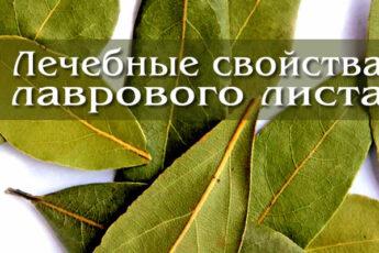 Факты о пользе и лечебных свойствах лаврового листа