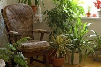 10 растений для идеального микроклимата в доме.