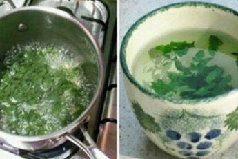 Чудо растение для женщин: балансирует гормоны, снижает вес, избавляет от диабета, запоров, остеопороза и не только