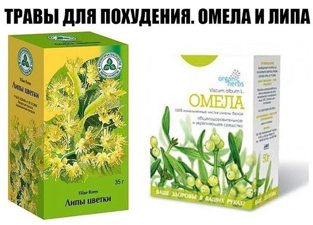 Травы для похудения омела и липа