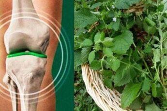 Как восстановить хрящи бедра и коленей с помощью мощного домашнего средства
