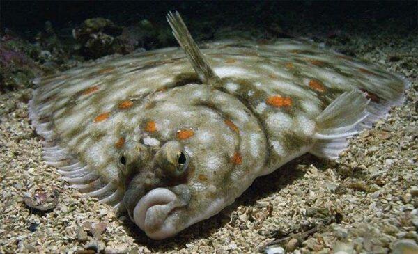 Если хотите жить долго, — такую рыбу лучше не есть