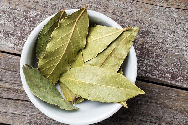 Эти листья — Благословение от Бога: Они могут бороться с бессоницей, высоким уровнем кровяного давления и сахара